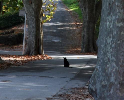 cat in a lane crop